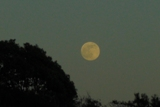 夕の月.jpg