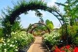文化園のバラ.jpg