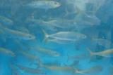 水魚.jpg