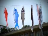 空に向かう魚.jpg