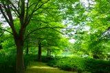 緑のなか.jpg