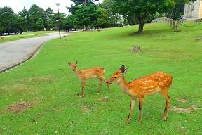 鹿の朝.jpg