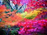 永源寺の紅葉.jpg