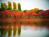 紅葉池.jpg