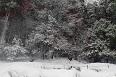 雪樹木ⅱ.jpg
